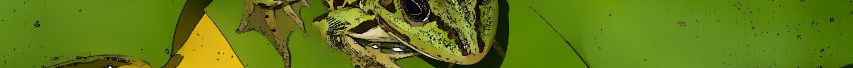 cropped-dscf6352c.jpg