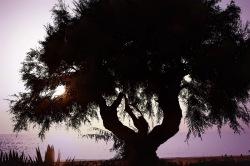 Baum3